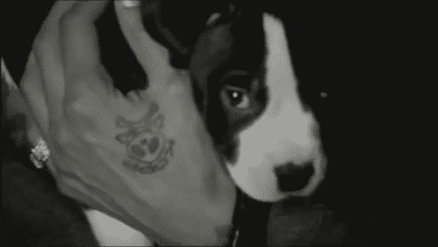 image-booba-pitbull-clip
