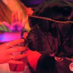 """Snoop Dogg en chien dans """"Toss It"""" avec Too Short"""