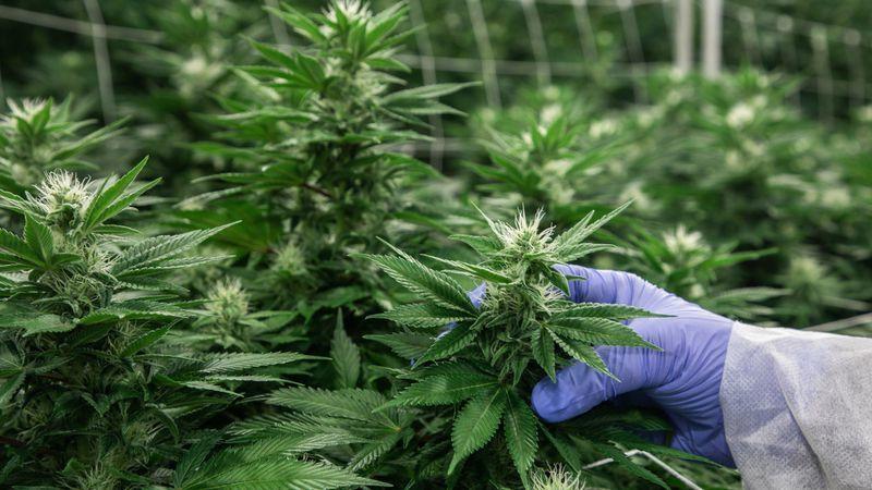 image weed légalisation illinois