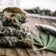 la beuher à tonton weed
